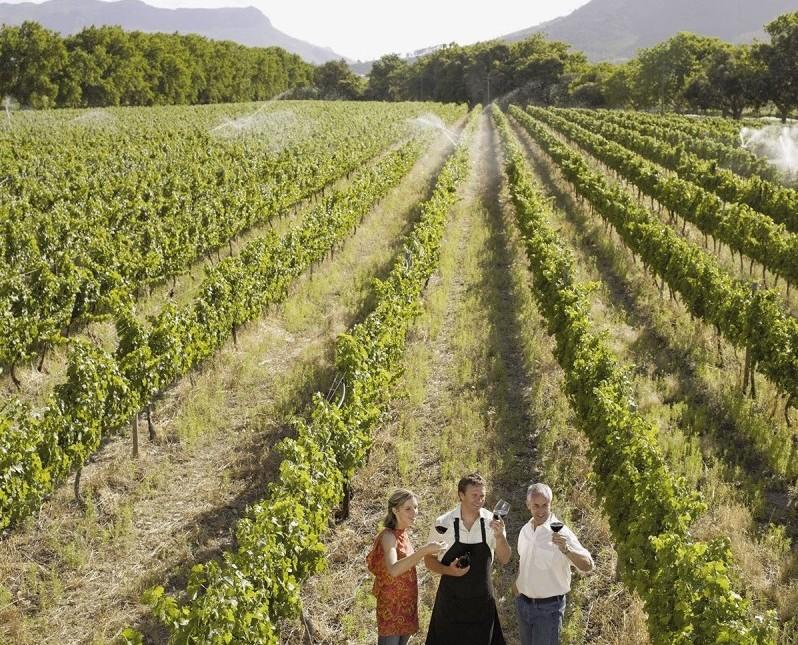 Achetez une parcelle de vignoble au clos Palombière