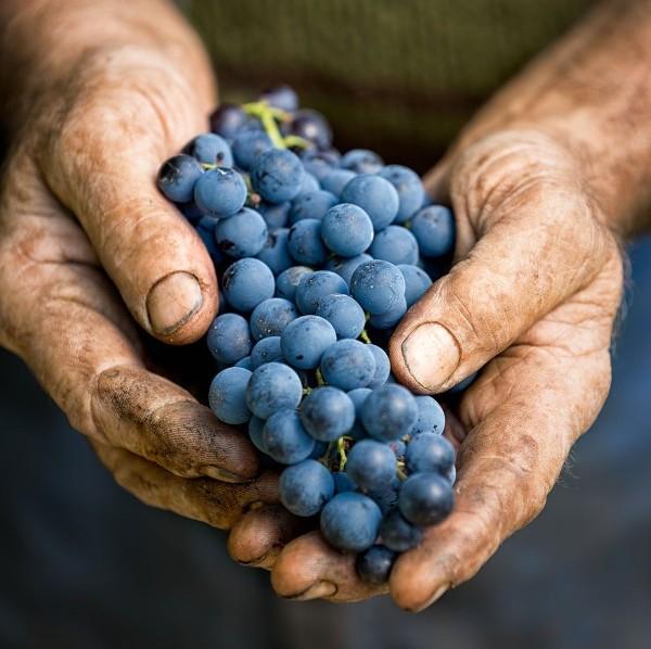 Récoltez votre propre vin avec le Clos Palombière